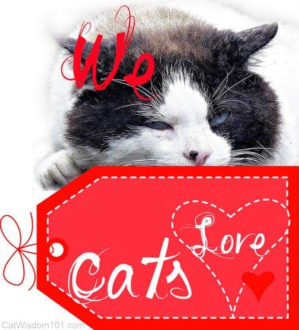 we love cats-valentine-cat wisdom 101