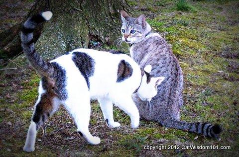 Cat-sweethearts-LOL cats- cat wisdom 101
