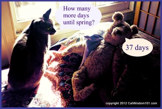 Cats-LOL-spring-teddy bear-cat wisdom 101