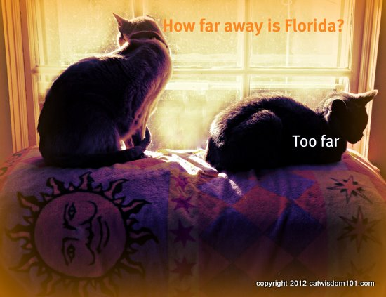 Florida-cats-art
