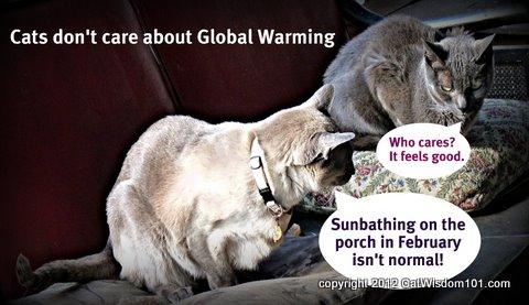 LOL cats-global warming-cat wisdom 101
