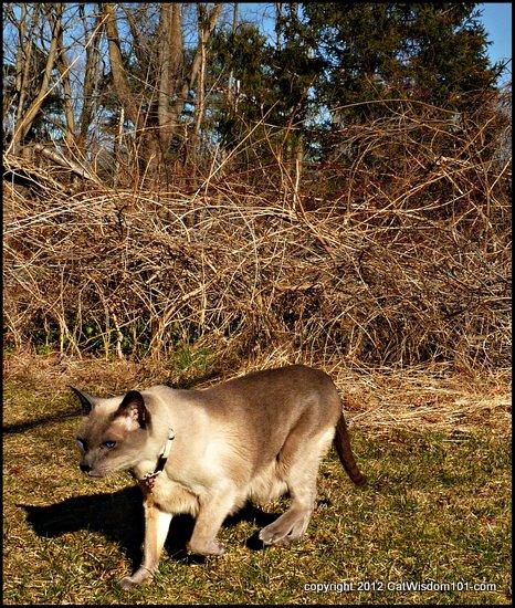 Merlin-cat-cat wisdom 101-outdoors