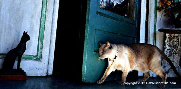 Merlin-cat-walking-cat wisdom 101
