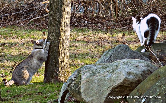 Mystery Miss-odin-cat-wisdom 101-cats
