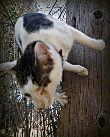 Odin-cat-climbing-cat wisdom 101