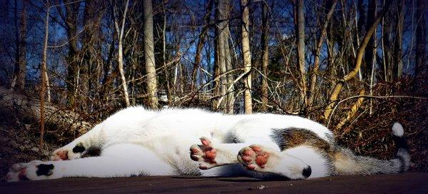 Odin-cat-sun-cat wisdom 101-paws