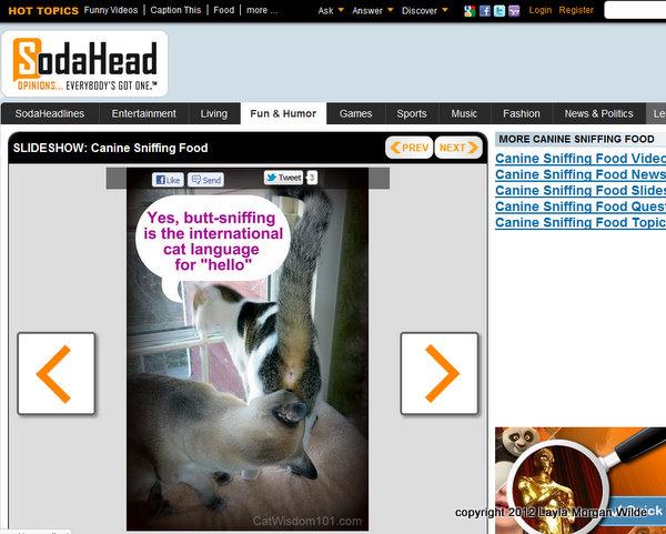 Stealing Stinks!-copyright-cat-images-cat wisdom 101-sodahead
