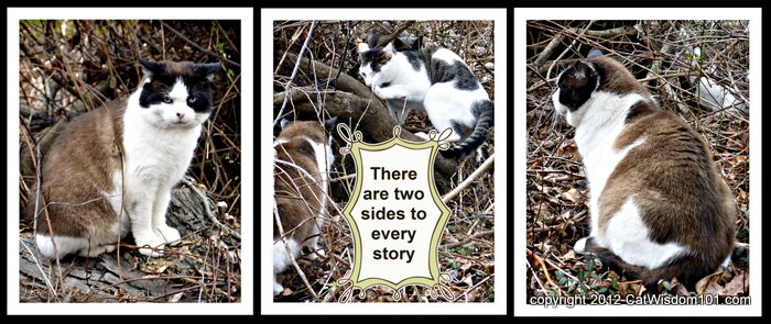 Two Sides To Every Story Cat Quote Outdoors Layla Morgan Wilde
