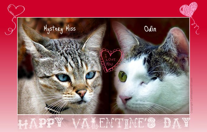 Valentine-cat-new york post-odin-mystery miss-cat wisdom 101-Layla Morgan Wilde