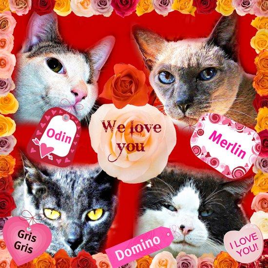 Cat Wisdom 101-Valentine