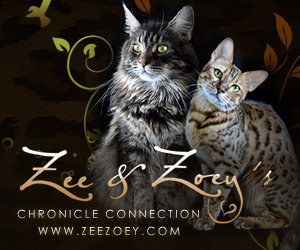 Zee and Zoey- cat wisdom 101