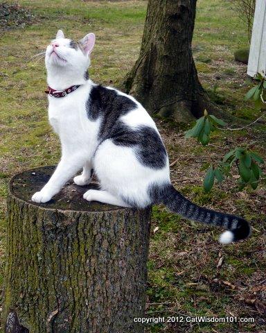 agility training-cats-cat wisdom 101