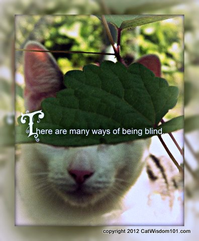 blind-cat-cat wisdom 101-quote