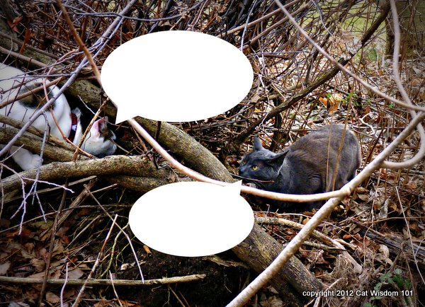 caption-contest-LOl cats-cat wisdom 101