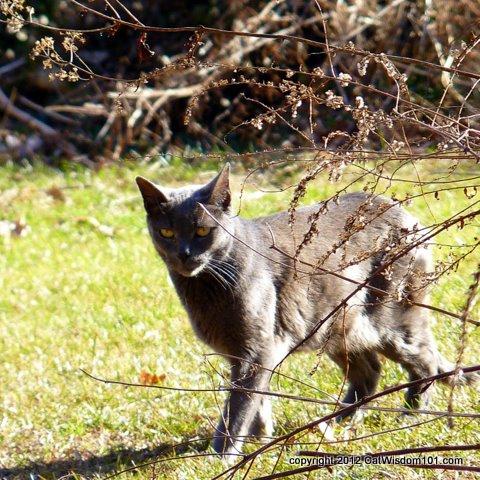 cat-art-portrait-gris gris-cat wisdom 101