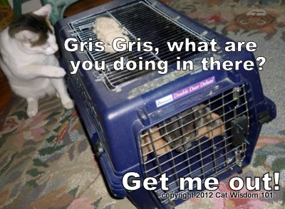 cat-humor-carrier-cat wisdom 101