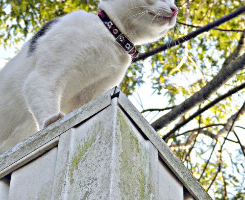cat-roof-yoo hoo-