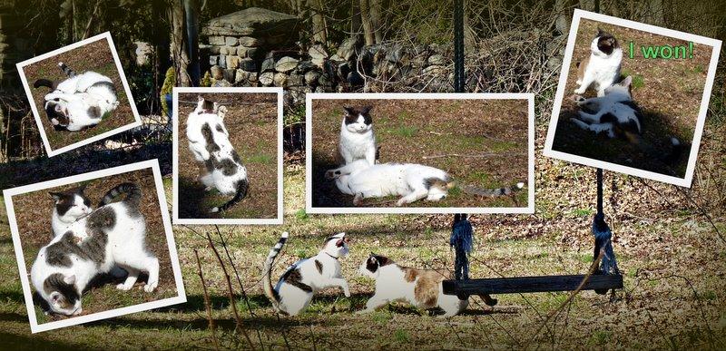 cat-wrestling-LOL cats-cat wisdom 101