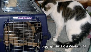 cats-carrier-cat wisdom 101