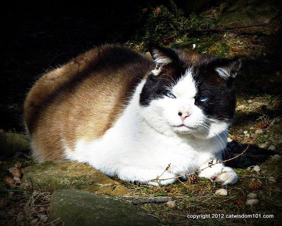 domino-cat-woods-cat wisdom 101