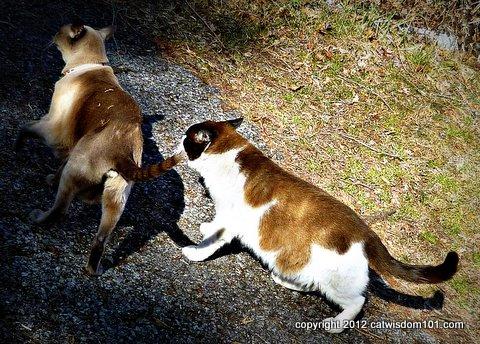 domino-merlin-walking-cats-cat wisdom 101