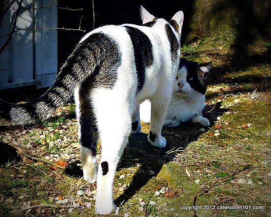 domino-odin-cats-outdoors-cat wisdom 101