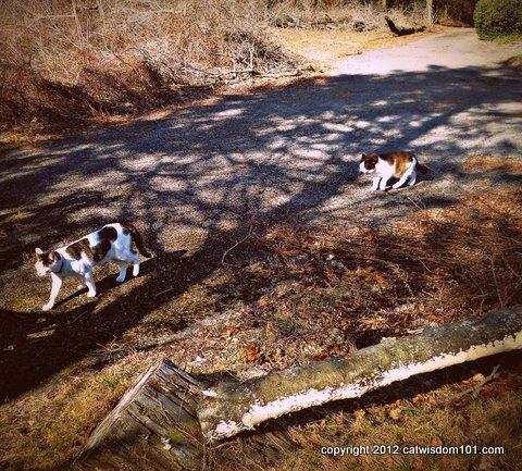 domino-odin-walking-cats-cat wisdom 101