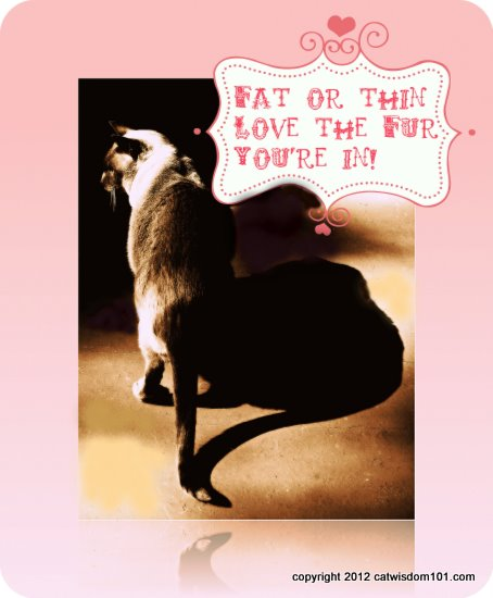 fat-thin-quote-cat-funny-cat wisdom 101