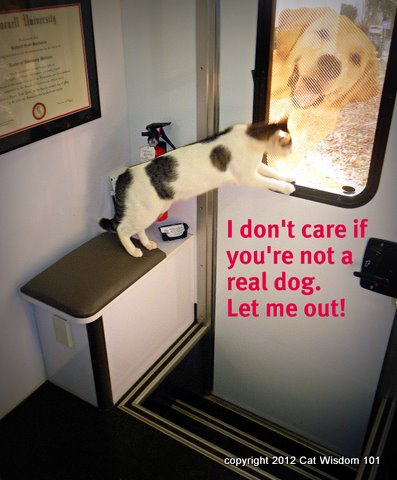 mobile vet squad-dr.richard goldstein-cat-dog-humor-cat wisdom 101