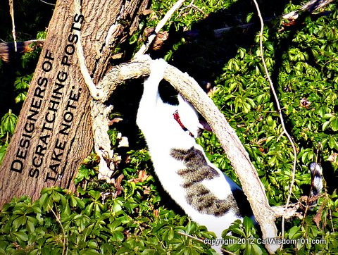 natural scatching post-design-LOL cat-cat wisdom 101