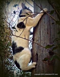 odin-cat-tree-climbing-cat wisdom 101