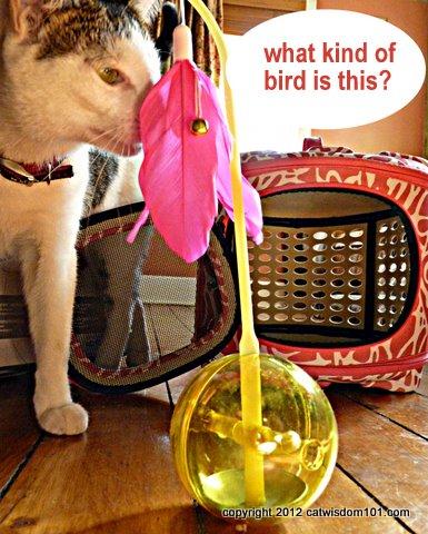 petmate.com-catwisdom101.com