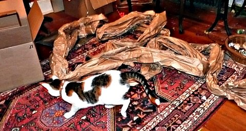 playing-paper-cat-