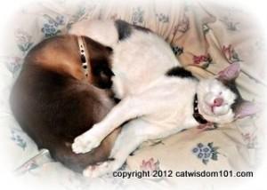 sleeping cats-cat wisdom 101
