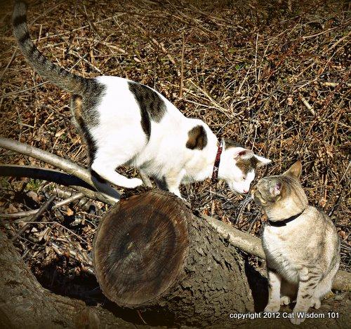valentine cats-odin-mystery miss
