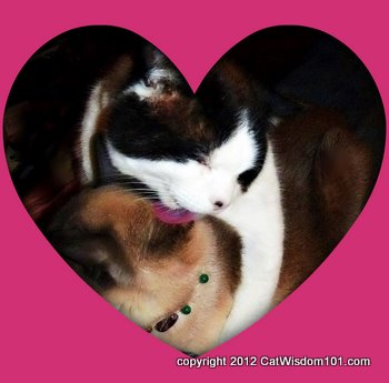 valentine-cats-licking-grooming-love-