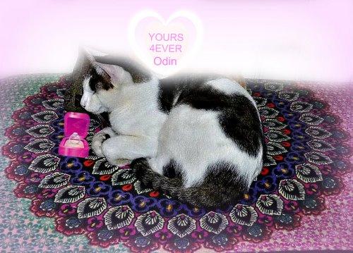valentine-lol cat-yours 4 ever-cat wisdom 101