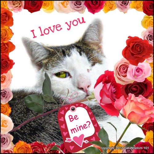valentine-odin-cat-catwisdom 101