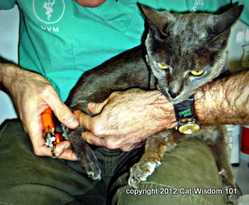 vet-visit-cat-nail-clipping-cat wisdom 101