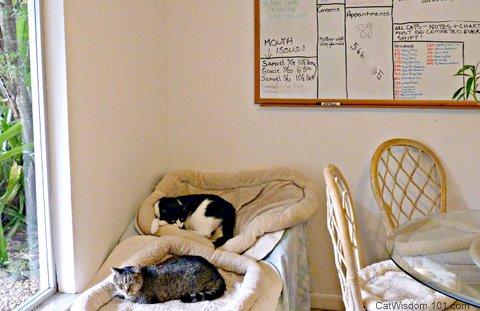 Bridget's crossing cat-sanctuary