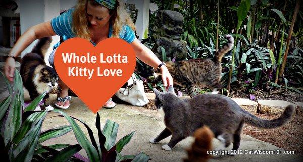 Brigid's Crossing-cats-cat wisdom 101-Layla Morgan Wilde