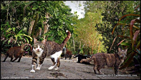 Brigid's Crossing-cats-cat wisdom 101-cat behaviorist- Layla Morgan Wilde