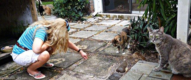 Brigid's Crossing-cats-holistic-cat behaviorist-Layla Morgan Wilde