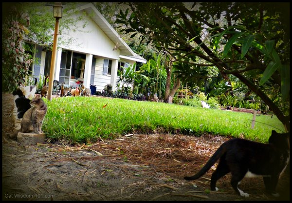 Brigid's Crossing-cats