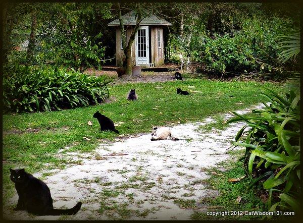 Brigid's cross-cats-sanctuary-cat wisdom 101-behaviorist-Layla Morgan Wilde