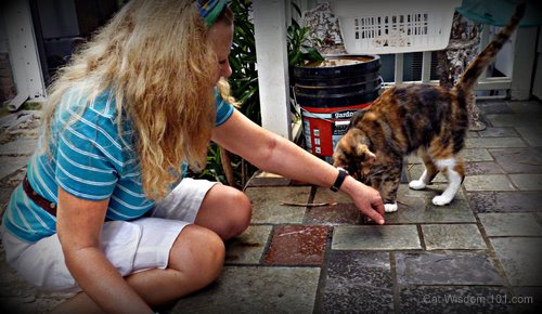 Brigid's crossing-cat-joy-holistic cat beahaviorist-layla morgan wilde
