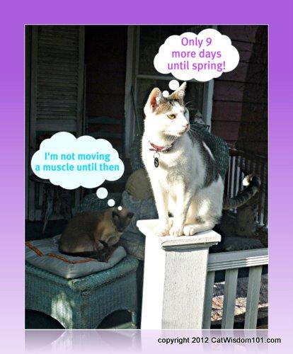 Cat-humor-spring-napping-catwisdom 101