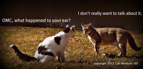 Odin-MM-cat wisdom 101-bushy-tail