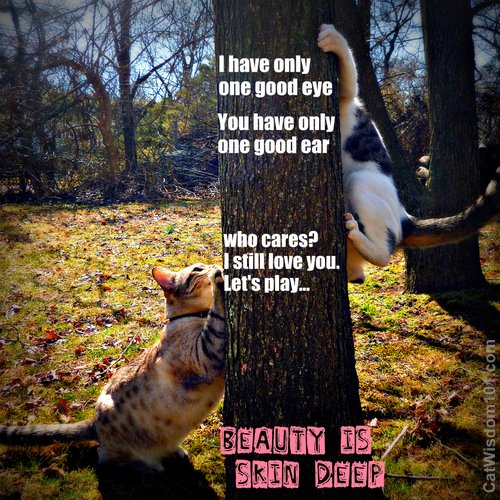 beauty-skin deep-cats-playing-cat wisdom 101