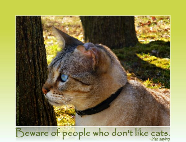 beware of people who don't like cats-quote- st.patrick's day-cat wisdom 101